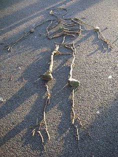 Making skeletons (using sticks) | Creative STAR Learning | I'm a teacher, get me OUTSIDE here!