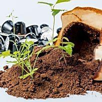 ber ideen zu himbeeren pflanzen auf pinterest gurkenpflanzen sch ner garten und pflanzen. Black Bedroom Furniture Sets. Home Design Ideas