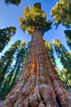 General Sherman, Sequoia National Park, California