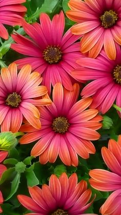 pink and orange and coral flower power Flower Background Wallpaper, Flower Phone Wallpaper, Flower Backgrounds, Colorful Wallpaper, Wallpaper Spring, Wallpaper Desktop, Flowers Nature, Exotic Flowers, Amazing Flowers