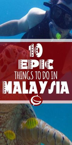 Top 10 Things to do in Malaysia. Adventure backpacker ideas. Ideas for photgraphy for snorkling, hiking in Tamen Negara, Penang Mount Kinabalu | Globemad Blogs