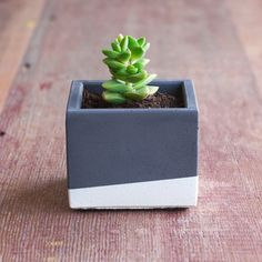 Color Block Concrete Planter by NystromGoods