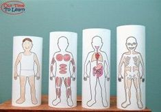 Learn about body systems with this fun craft! Nesting body systems tubes - free print-able at Our Time to Learn blog. Preschool, home school, kindergarten, human body, anatomy
