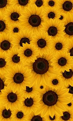 """Faith, brilliance, loyalty and affection are the connotations of sunflower. The implied meaning is """"silent love"""".Hope the sunflower wallpaper can help you find the happiness you want ,and the sunlight that belongs to you! Flower Background Wallpaper, Flower Phone Wallpaper, Emoji Wallpaper, Cute Wallpaper Backgrounds, Wallpaper Iphone Cute, Cellphone Wallpaper, Flower Backgrounds, Pretty Wallpapers, Colorful Wallpaper"""