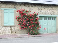 Roses - My French Country Home, French Living - Sharon Santoni
