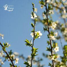 Spring time #springbreak2020 #springiscoming #flowerstagram #flowersofinstagram Spring Is Coming, Spring Break, Spring Time, Flowers, Plants, Instagram, Flora, Winter Vacations, Plant
