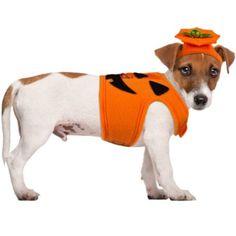 Jack-O-Lantern Pumpkin Dog Costume - Party City