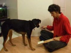 ▶ Shaping Explained- Part 1 of Training Your Dog to Turn on a Light Switch with Clicker - YouTube