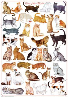 Cats of the World Educational Science Chart Poster Posters at AllPosters.com
