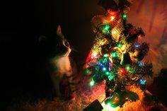 17 rzeczy, które wszystkie koty robią w święta.