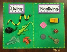 These activities are how I teach living & nonliving in my Kindergarten classroom. Science Center Preschool, Montessori Science, Science Centers, Science For Kids, Science Ideas, Science Fun, Science Experiments, Kindergarten Centers, Kindergarten Science