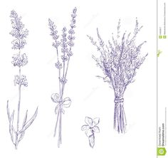 simple lavender drawing - Google Search