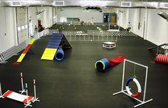 Indoor, beginning Agility Course