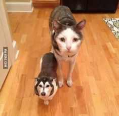 Faceswap done right