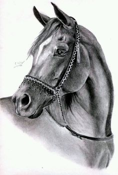 Arabian horse sketch horse head sketch wonderfully horse by on of horse head sketch fabulous arabian horse pencil drawings Horse Pencil Drawing, Horse Drawings, Pencil Art Drawings, Animal Drawings, Art Sketches, Animal Paintings, Horse Head Drawing, Horse Sketch, Horse Artwork