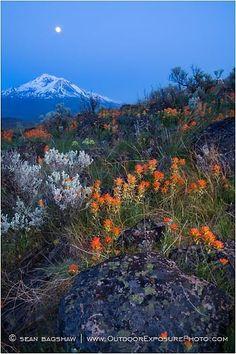 Mt. Shasta Nightfall  - California
