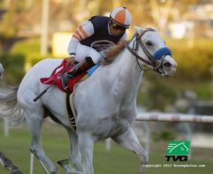 Egg Drop wins the last Matriarch at Hollywood Park