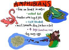 Animal Classification website