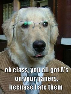 Funny Picture of why a dog shouldn't be a teacher :)