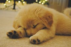 Sleepy puppy.