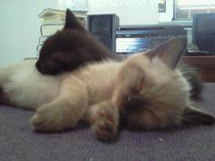 Nala  and Eto'