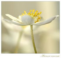 white softness by ~grandma-S on deviantART