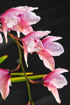 Orchid Lovely | Photo Place
