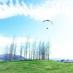 this paraglider landed next to me while I was out walking my dog