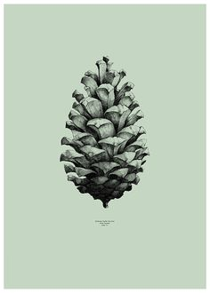 Affiche Pine Cone Green by Form Us with Love - Paper Collective - Visuel 1