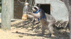 EBA: Enriquecimiento y Bienestar Animal