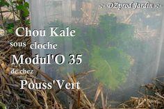 kale-sous-cloche-dzprod-jardin-02-novembre-2016