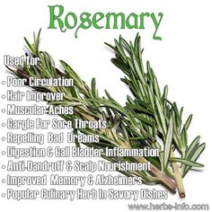 Rosemary - fantastic culinary herb with a fascinating history, that also has a host of therapeutic uses!