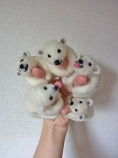 polar bear rings