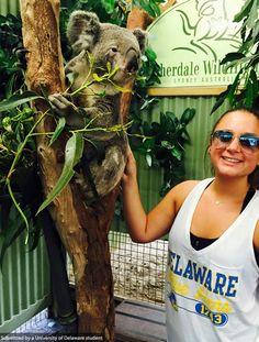 Joanna Lemons meets a Koala in Sydney, Australia ! #UDAbroad