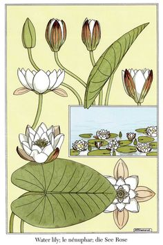 thingswoolike:  Grasset's Art Nouveau Flower and Plant Designs 1 (byneefer)