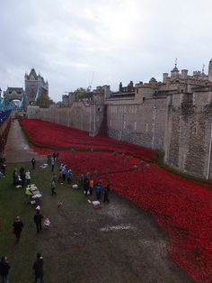 Tower of London Poppies - view towards Tower Bridge - November 2014 Tower Of London, Tower Bridge, Poppies, November, Louvre, Explore, Building, Travel, November Born