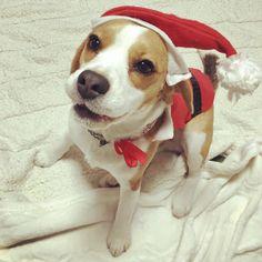 """MERRY CHRISTMAS"