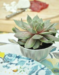A succulent in a vintage tart pan makes a nice mini-decoration