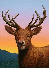 Animals Paintings - Portrait of a Red Deer  by James W Johnson