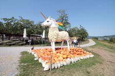 """Kürbiseinhorn auf dem Juckerhof in Seegräben (Pumpkin Unicorn). Das Thema der diesjährigen Kürbisausstellung lautet """"Fabelwesen"""". Magical Creatures, Sculptures"""