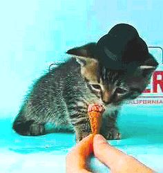 Tom Waits kitten eats ice cream.