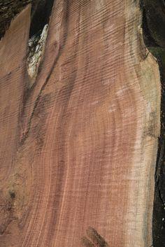 cutting the sapele log ~ Hearne Hardwoods Inc.