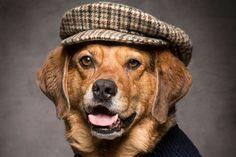 Classic Dog Names Unique Female Dog Names, Girl Dog Names Unique, Best Dog Names, Pet Names, Cute Girl Puppy Names, Pet Dogs, Pets, Girl And Dog, Puppies