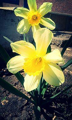 #nature #flowers