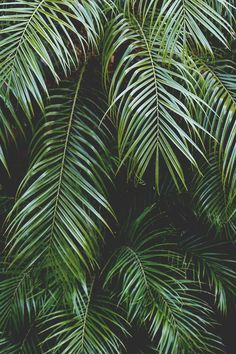 Mahalo, Maui: Lessons Learned on a Hawaiian Getaway - pflanzen - Nature Motif Tropical, Tropical Vibes, Tropical Leaves, Maui, Belle Photo, Palm Trees, Palm Tree Leaves, Palm Tree Print, Mother Nature