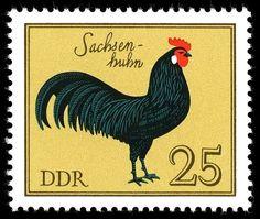 Alemania-Gallo