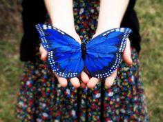 butterfly. #butterfly #kelebek #fly #papillon #Schmetterling #mariposa #farfalla