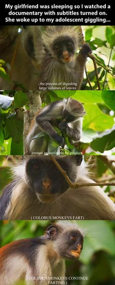monkey farts omg I almost died laughing but there's a baby asleep on my so I'm trying not to laugh but it's just to funny