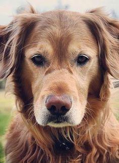 doggie, doggie, doggie!