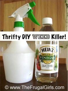 DIY Weed Killer Trick at TheFrugalGirls.com